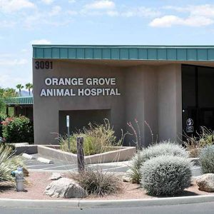 Orange Grove Animal Hospital